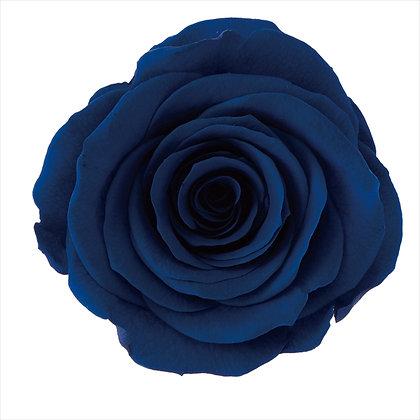 SINGLE BLOOM OHC-05202-661 Rose Kanon
