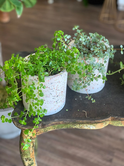 Hanging Succulent Terrazzo Pot