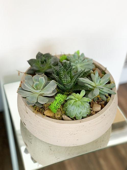 Grey Cement Succulent Bowl