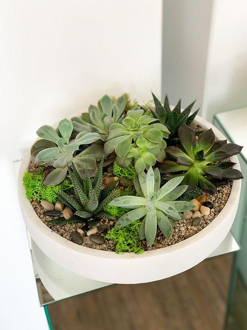White Concrete Succulent Bowl