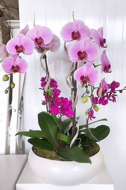 Luxurious Orchid Bowl
