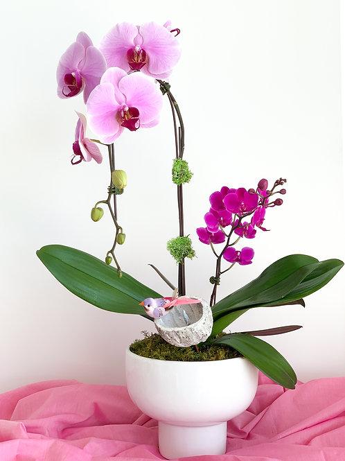 Double Orchid Pot