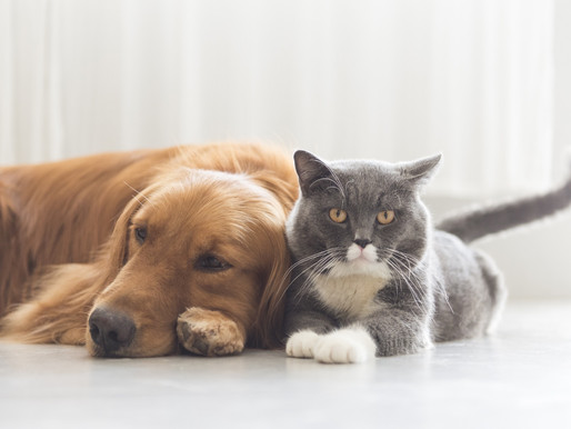 Making provisions for your pets in your will