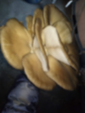 2. el mantarhane 2. el mantar çadırı mantar satışı yapan frmalar mantar alımı yapan frmalar mantar çadırı kuan fimalar trakya edirne türkiye