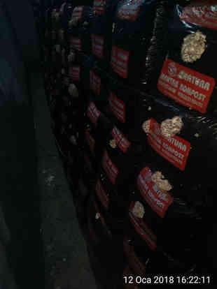 Çığ mantar k 6 İlk üretim.jpeg