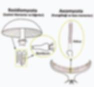 mantarı üretmek için danışmanlık hizmeti doğru bilgiler tesis kurulum mantar üretim danışmanlığı