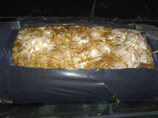 Mart 2020 Kompost sarımları gün-8