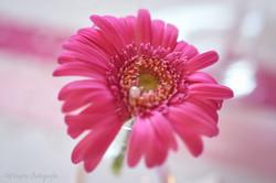 mariage thème des fleurs