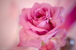 rose aqua