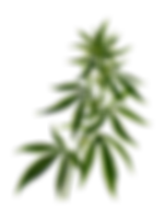cannabis-2028244_640.png