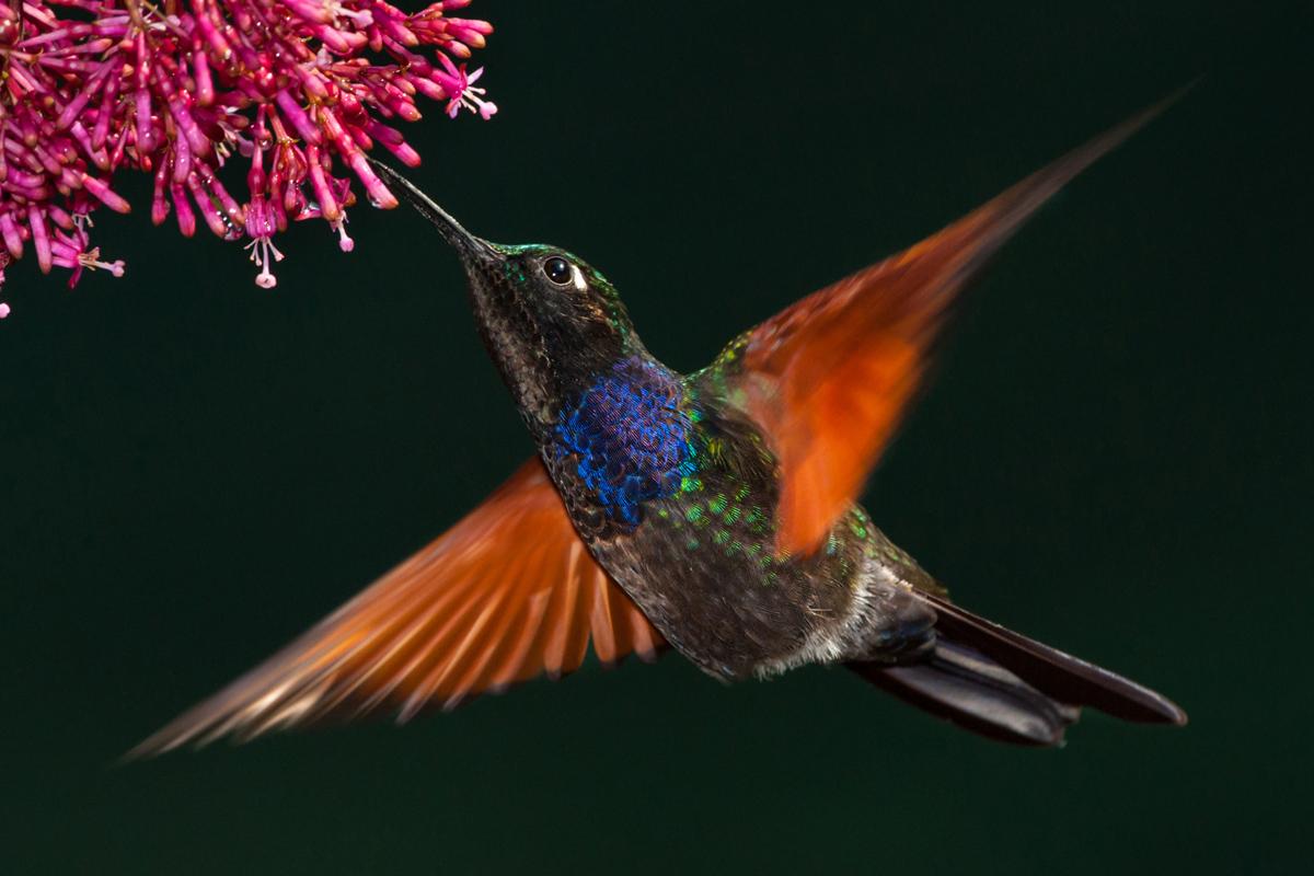 D.S. Kolibrie-Seminar Naturfotografie