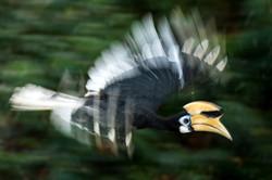 ┬®Dieter Schonlau-Pressefoto-Hornvogel