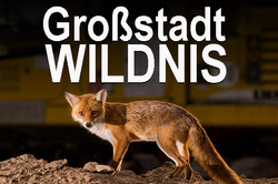 Start_Großstadtwildnis