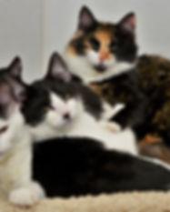 Pastry Kittens.jpg