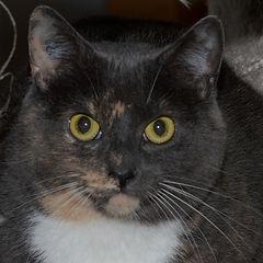 Momma Kitty-1305-18 (2).JPG