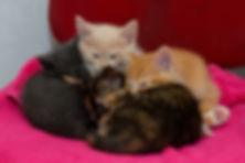 Ruby's kittens (4 of 5).JPG