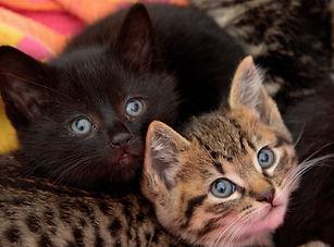 Kittens(1)-0806-20.JPG