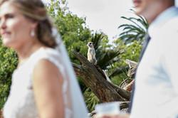 A meerkat looking on at zoo wedding