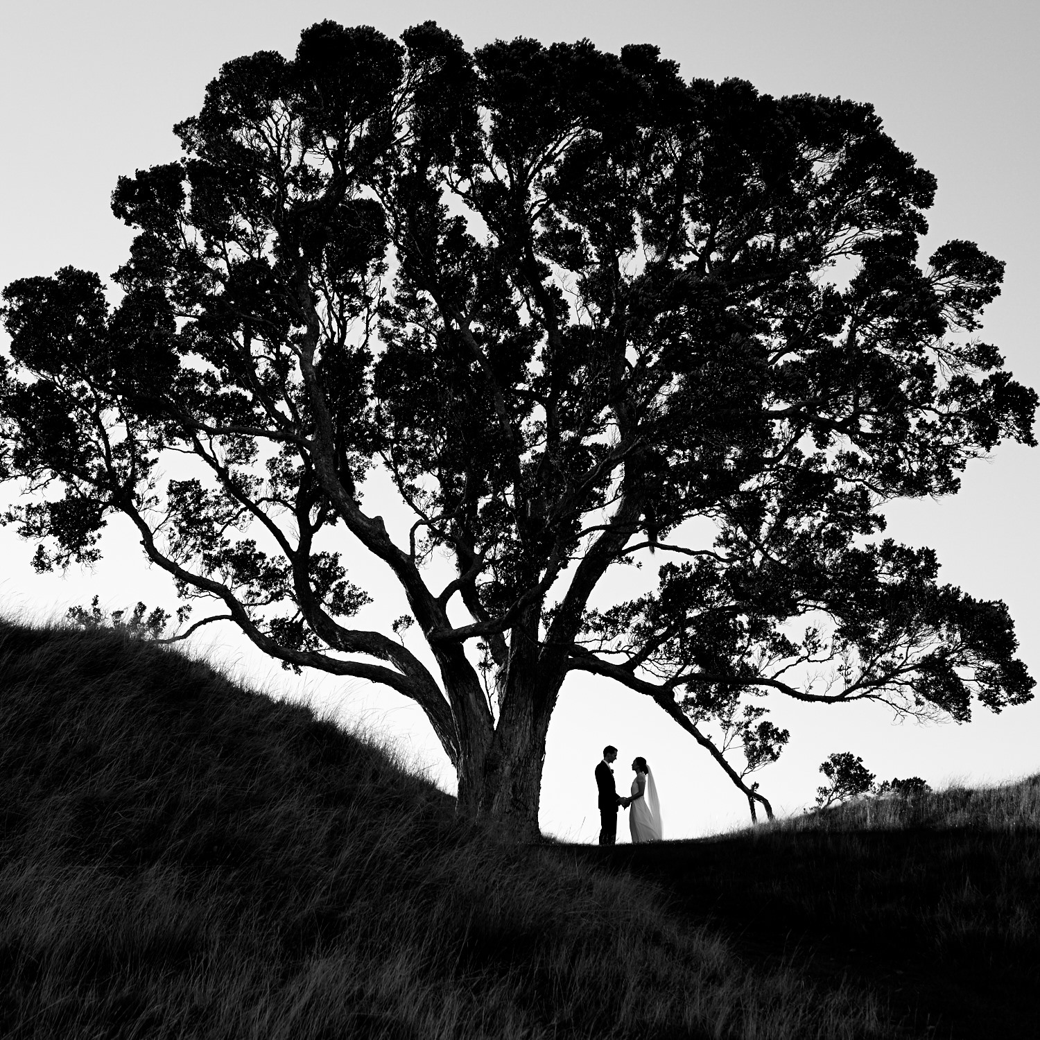 best wedding photo under tree