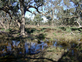Macquarie Marshes, August 2010.jpg