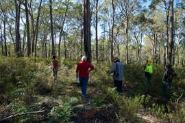 Mullion Range Flora Survey, Boshes Creek