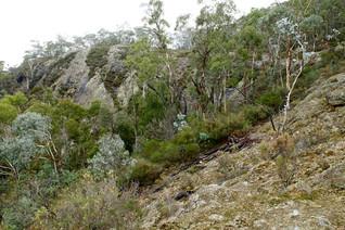 The Walls, Mt Canobolas April 2016.jpg