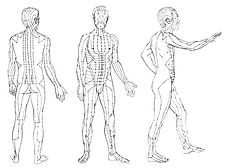 acupuncture-meridians-qigong.jpg