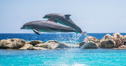 dolphins-906175_1920