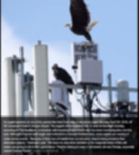 Eagle EMF.JPG