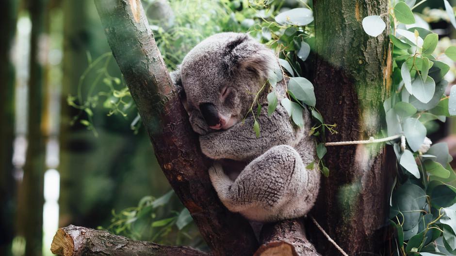 Why You Need To Prioritise Sleep