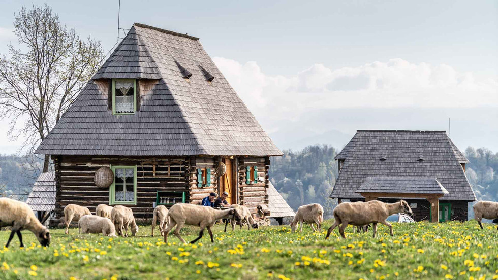 Schafe grasen zwischen den Häusern