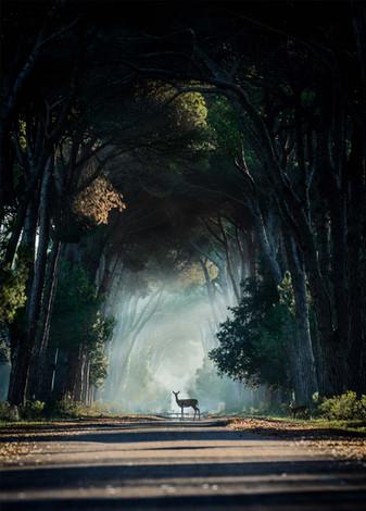 Wildwechsel im Wald