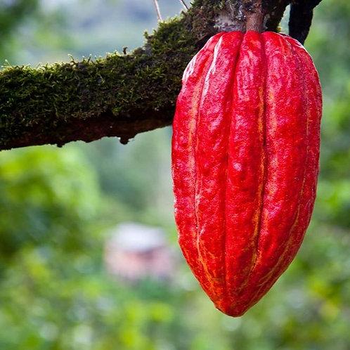 Burro di Cacao Deodorato Biologico Chips 100 g, 500 g
