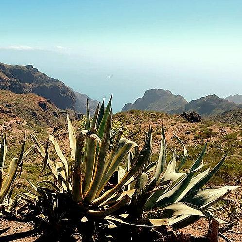 Tenerife Fragranza