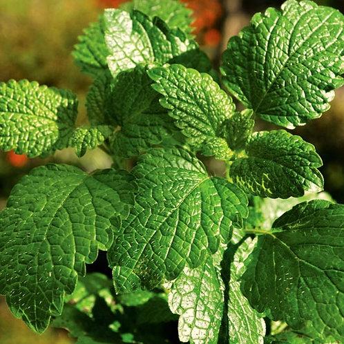 Idrolato di Menta Piperita Bio 100 g, 250 g
