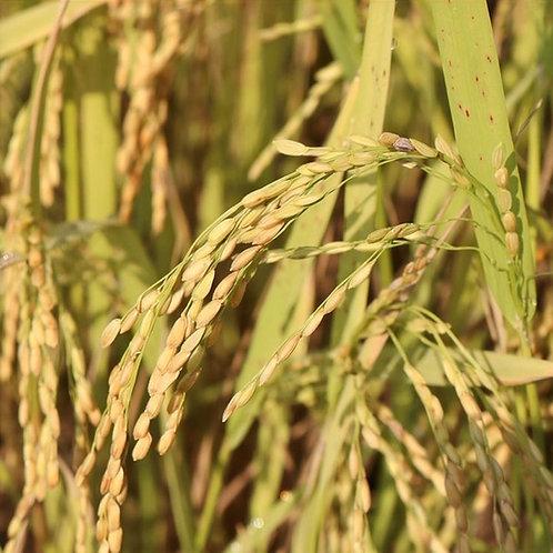 Olio di Riso Estratto CO2 Biologico 30 ml