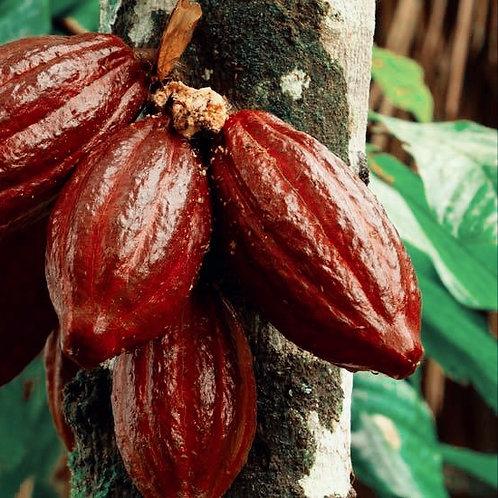 Estratto CO2  Cacao Butter