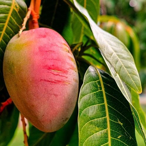 Burro Mango Bio Raffinato 100 g, 5 x 100 g