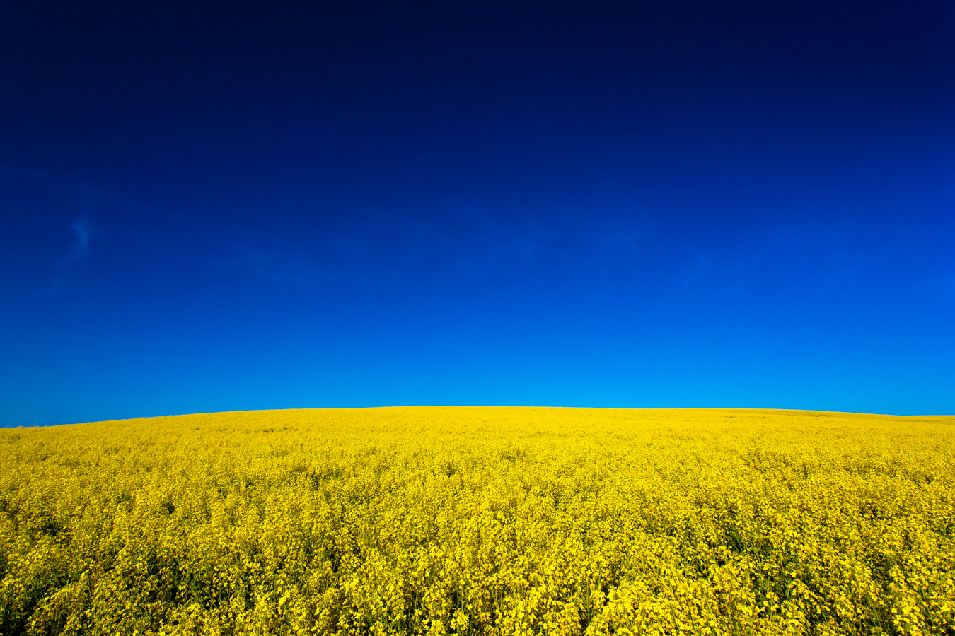 Blue & Yellow - Colfax, Washington