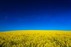 Blue & Yellow - Colfax, Washington