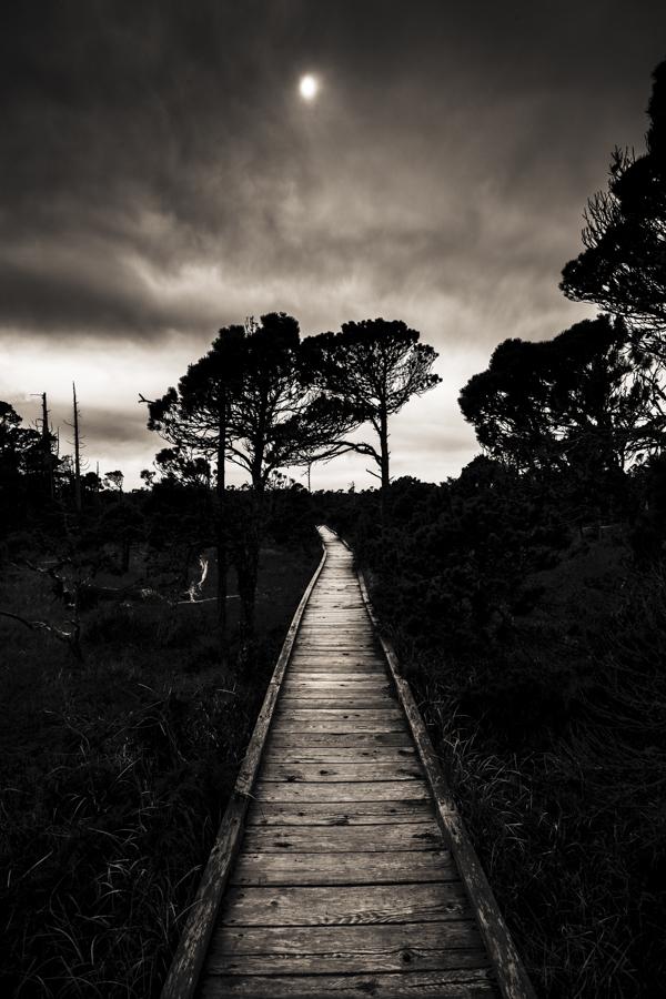 Paths II - Tofino, BC
