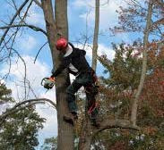 Tree care related fatalities down 22 percent