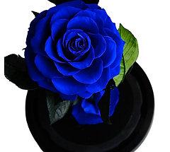 La belle et la bête - Bleu