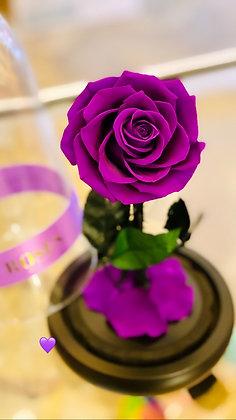 Beauty & the Beast - Purple