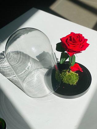La Cloche 🌹 RED ROSE
