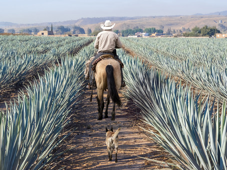 Mezcal & tequila... same same but different...