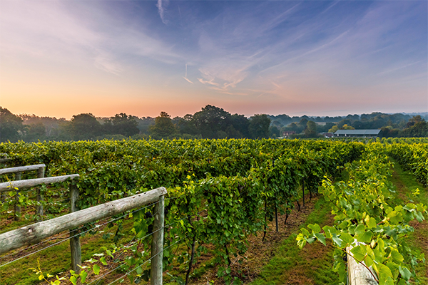vineyard_2048x.png