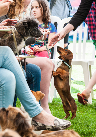 The Dogs Dinner competition on Hove Lawn