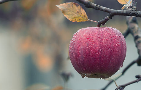 apple-1122537_1920.jpg