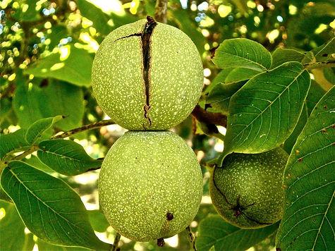 fruit-222042_1920.jpg